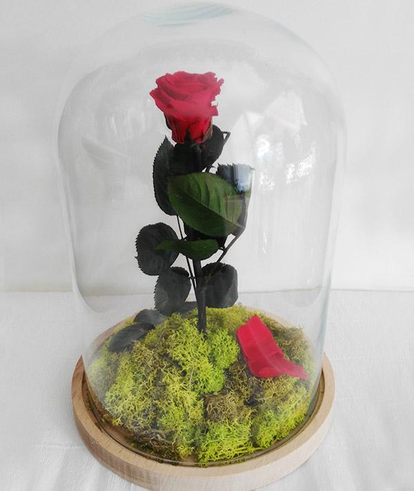 rosa eterna, rosa eterna en cupula de cristal